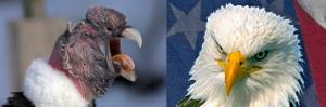 Condor&Eagle