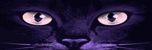 cats-eyes