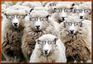 sheepsGlasses